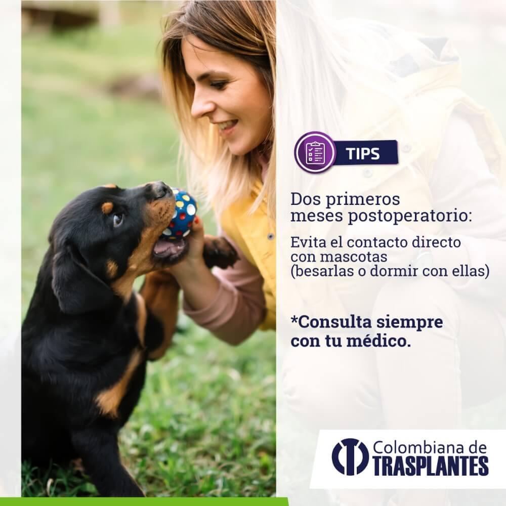 Evita el contacto con mascotas en tu recuperación de trasplante renal