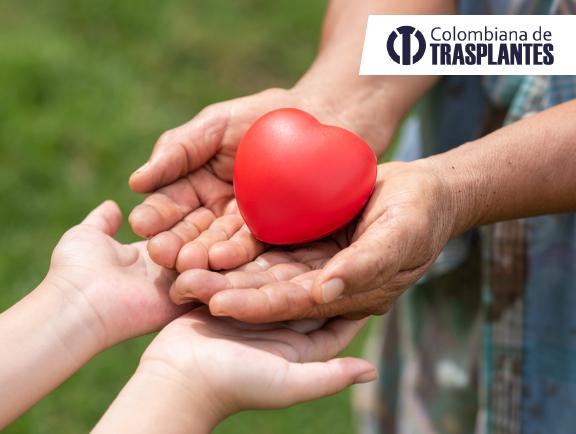 Donante-de-órganos